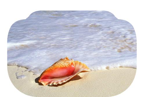 coquillage mer