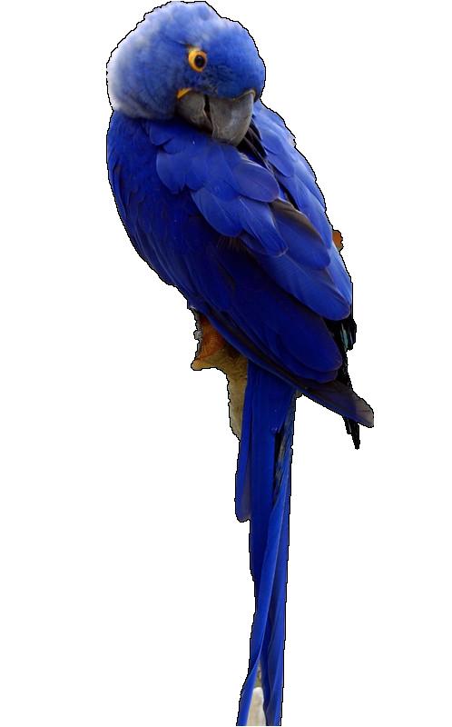 oiseaux 26