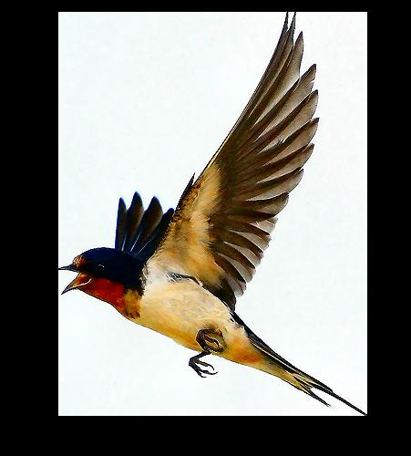 oiseaux 233