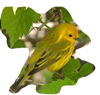 oiseaux 121