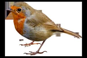 oiseau 231