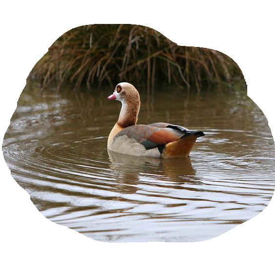 oiseaux 236