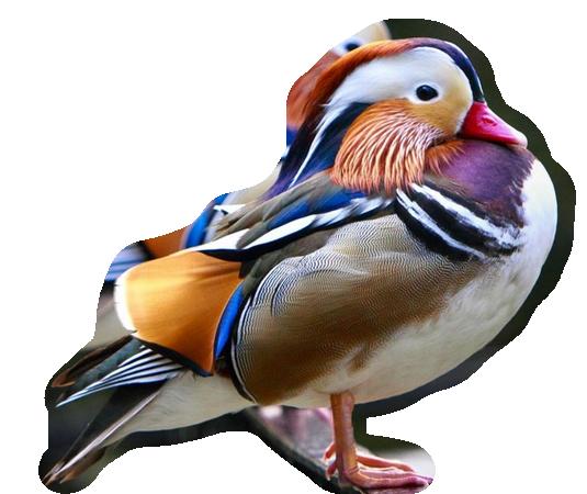 oiseaux 188