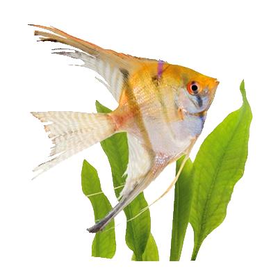 Les poissons en général 2d0c409b