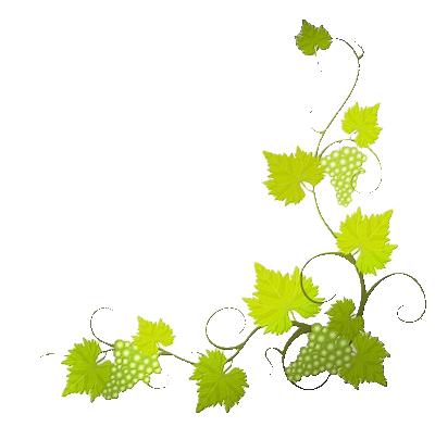 Tubes fleurs v g tales page 2 - Feuille de vigne dessin ...