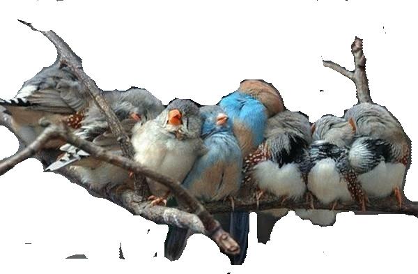 oiseaux 171