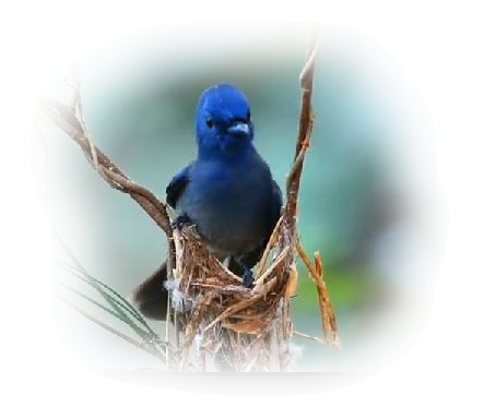 oiseaux 198