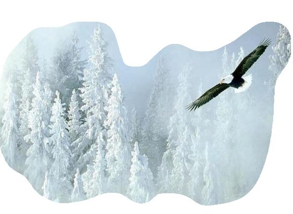 oiseaux 63