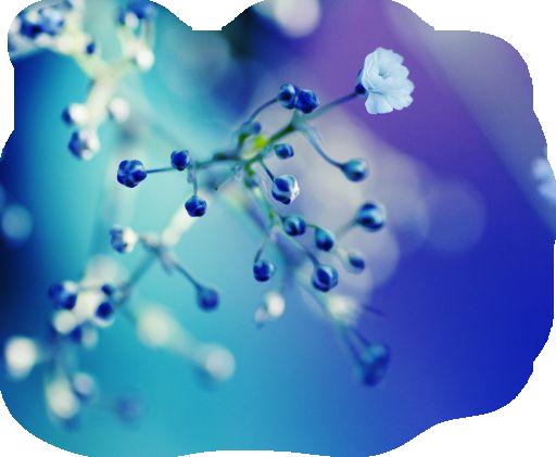 branche fleurie bleue