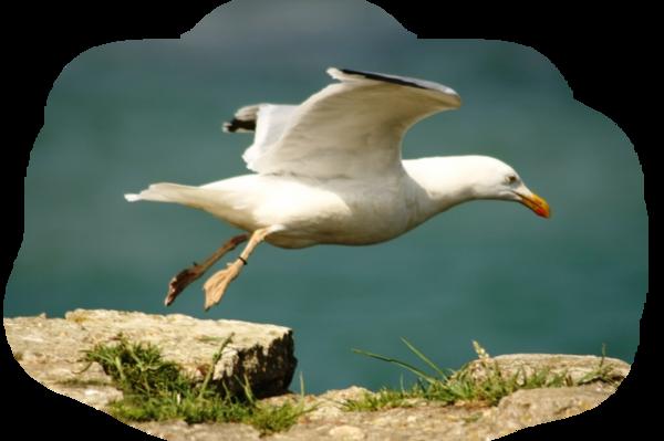 oiseaux 210