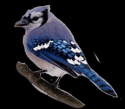oiseaux 142