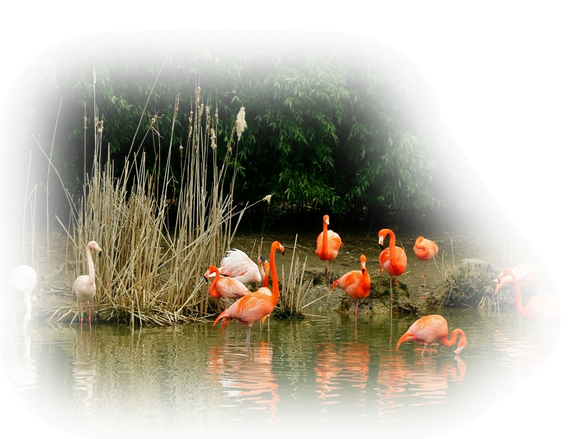 oiseaux 193