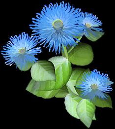 fleur bleue 33