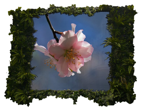 fleur image cadre