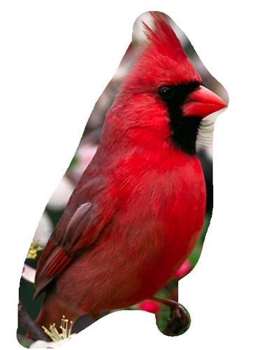 oiseaux 166