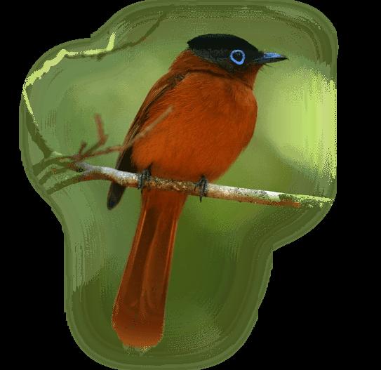 oiseau 173