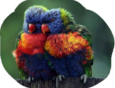 oiseaux 215