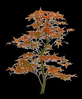 Tubes pays asiatique fleurs page 2 - Dessin arbre japonais ...
