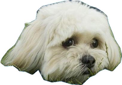 chien 5