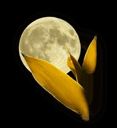 lune 29
