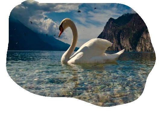 oiseaux 138