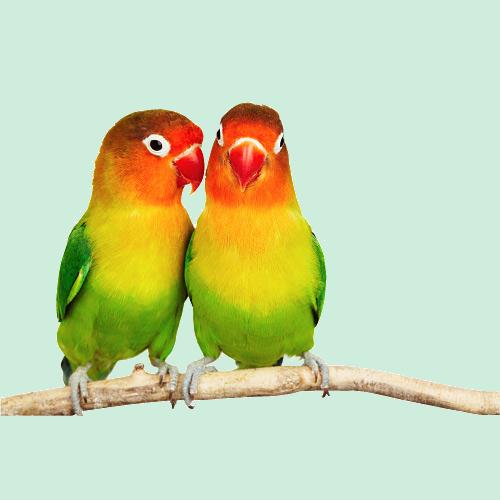 oiseaux 27