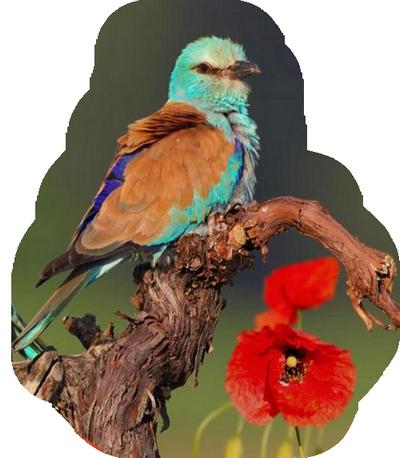 oiseau 206