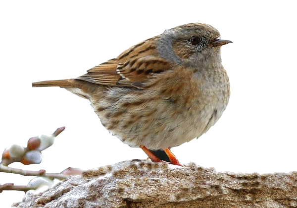 oiseaux 47
