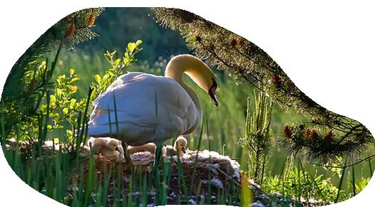 oiseaux 135