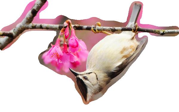 oiseaux 111