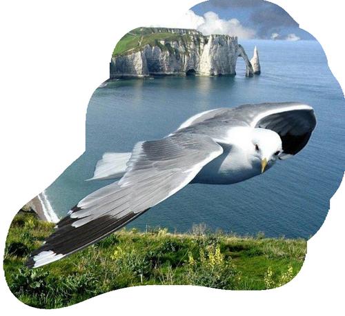 oiseau 199