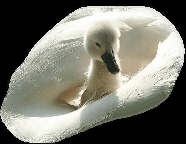 oiseaux 136