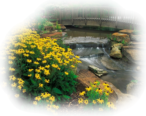 paysage fleurs et ruisseau