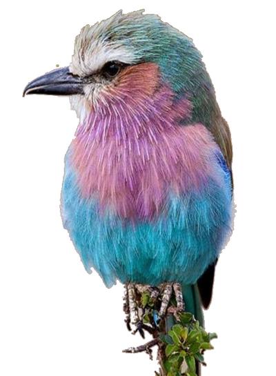 oiseau 205