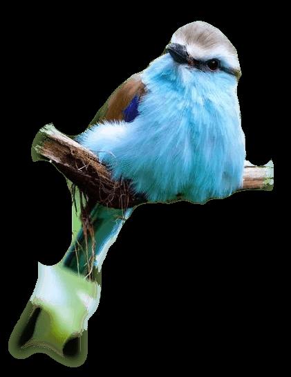 oiseaux 88
