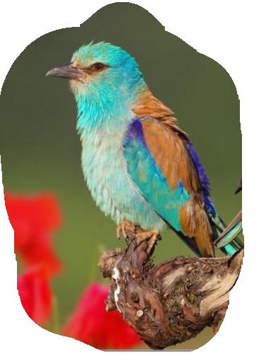 oiseau 207