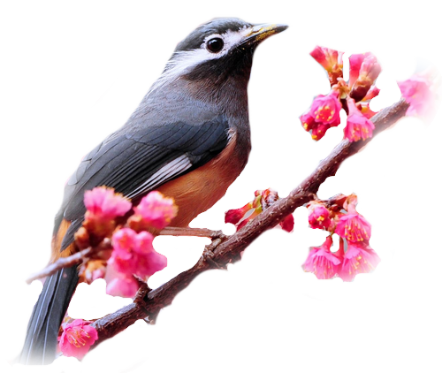 oiseaux 110
