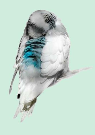 oiseaux 163