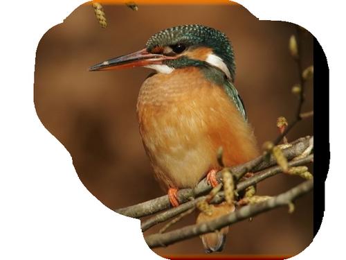 oiseaux 232