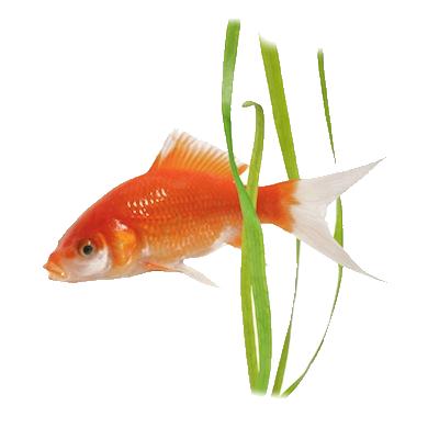 Les poissons en général Ba66ffe4