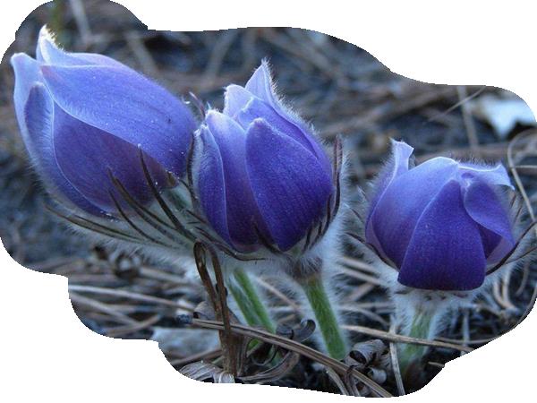 bleu 89