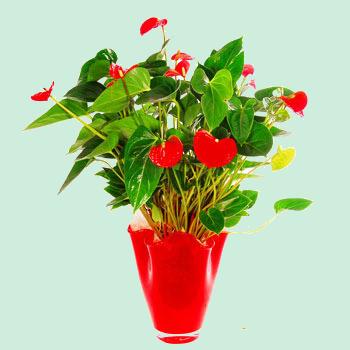 44. pot de fleurs rouges