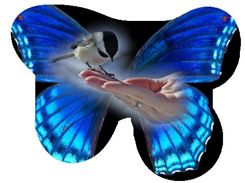 oiseaux 134