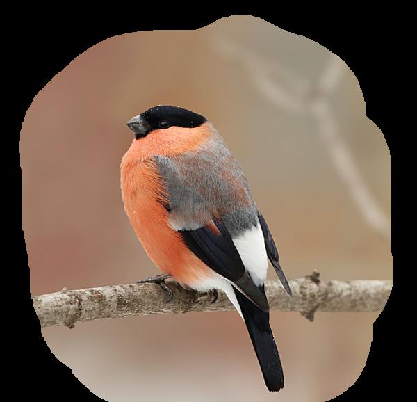 Tubes oiseaux en général  - Page 2 Ca061c85