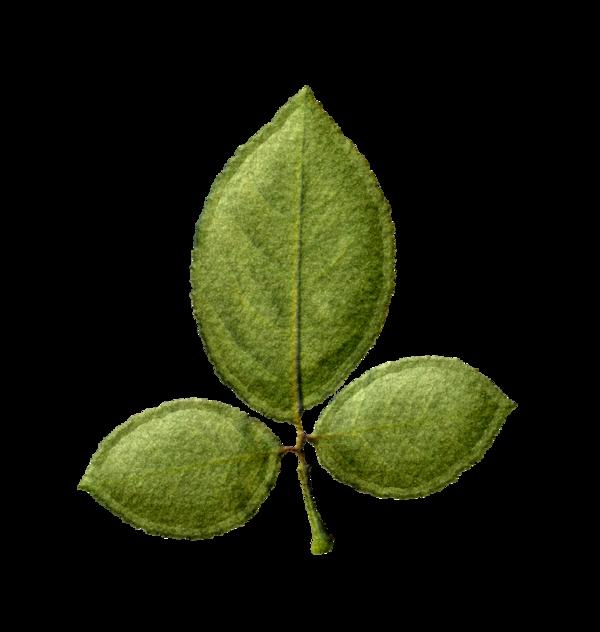 végétaux 70