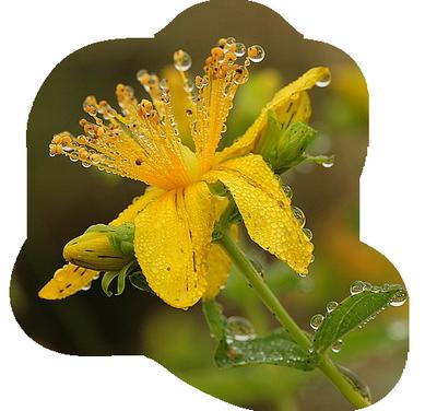 à fleur d'eau 9