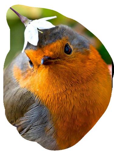 oiseaux 181