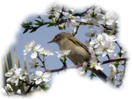 oiseaux 124