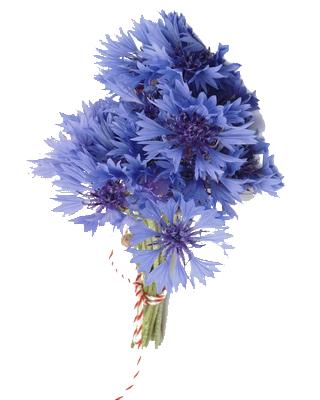 Bien-aimé tubes fleurs bleues RL98