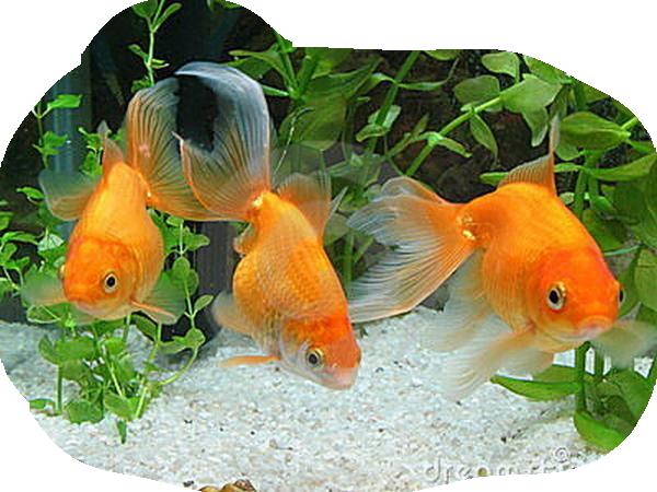 Les poissons en général Ec15c032